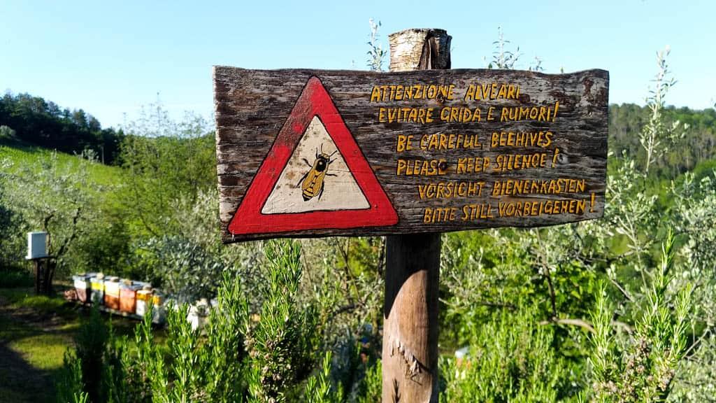 Olivové háje, domáci med, milujem Toskánsko